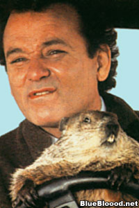 bill murray groundhog day punxsutawney phil