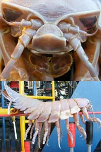sea monster bug isopod submarine robot