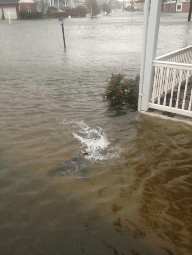 shark new jersey hurricane sandy